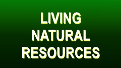 Living Natural Resources Action Button